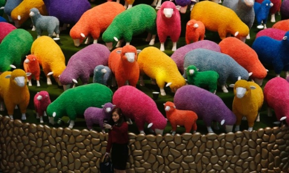 sheepHK
